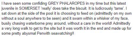grey phal 3.png
